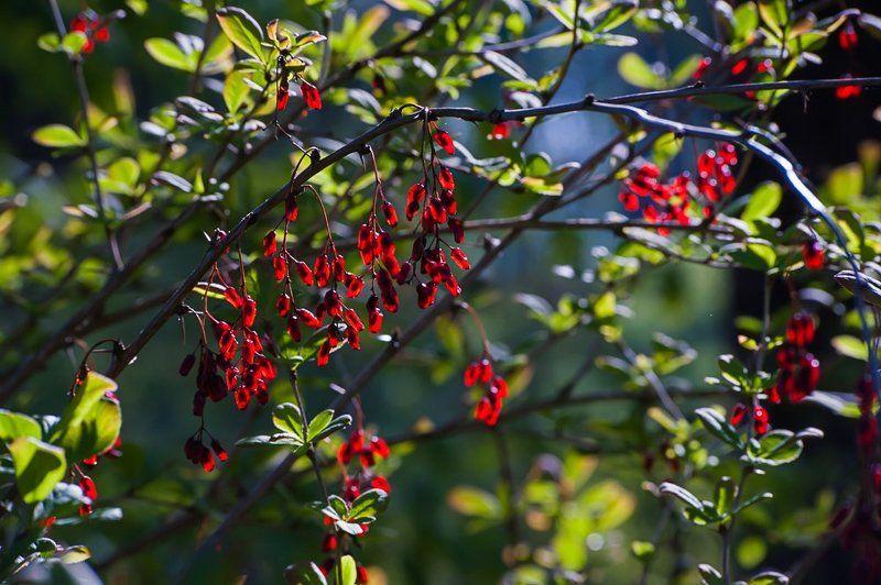 весна, зелень, листья, лес, цветы, московская область, подмосковье Pro майские леса Подмосковьяphoto preview