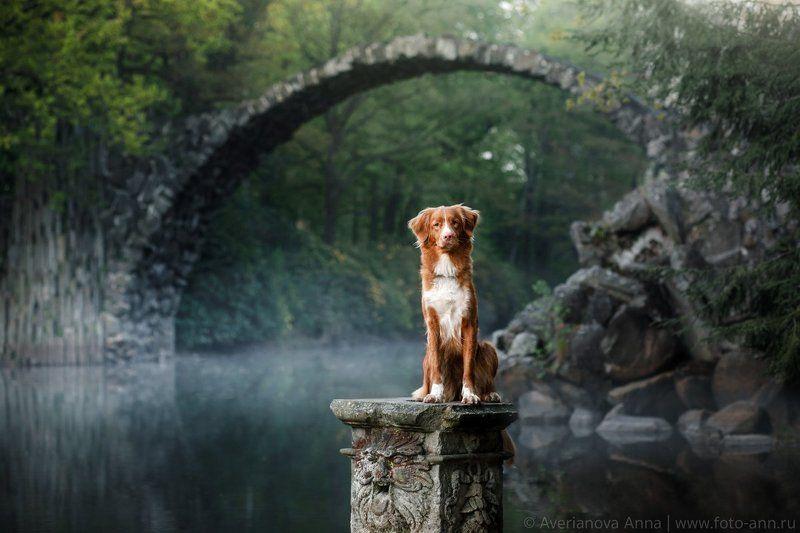 Собака, природа, путешествие, мост, Германия  У мистического мостикаphoto preview