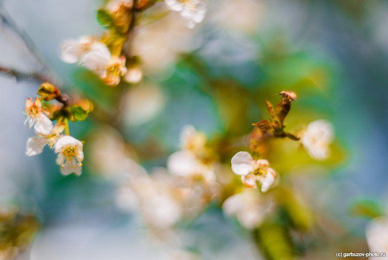 цветы, для, зеленого, жука Цветы для зеленого жукаphoto preview