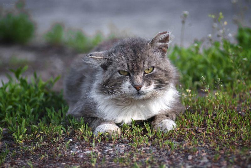 кот, котяра Весна на излёте ...photo preview