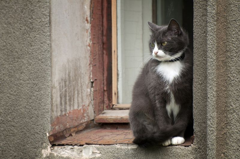 кот, котяра Сижу ..., смотрю ...photo preview