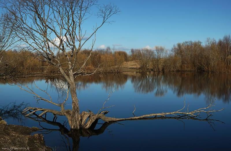 пейзаж, музыка ива. озеро. Матигоры . май 2017photo preview