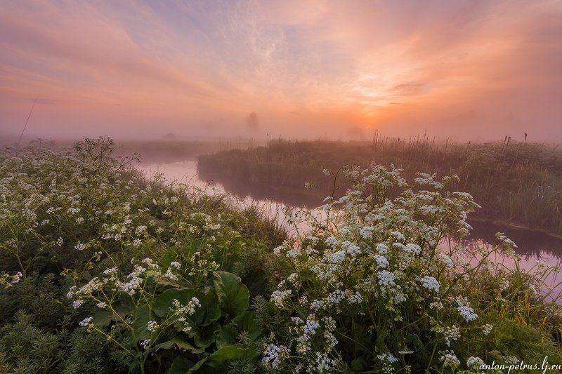 рассвет, туман, река, цветы Аромат рассветаphoto preview