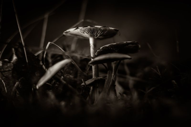 fungi, nature, mushroom, macro, close-up, bnw, black and white, series, color, green, red, brown,  Mushroomphoto preview