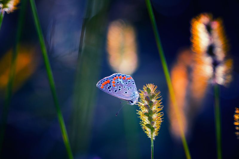 butterfly,nature,macro,light,bokeh,beautiful,fairy,insects,insect, Butterflyphoto preview