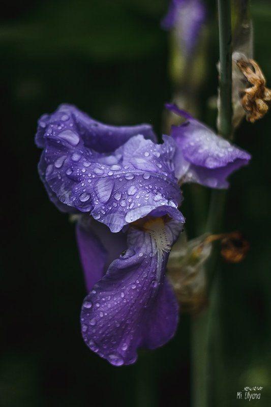 Магия дождяphoto preview