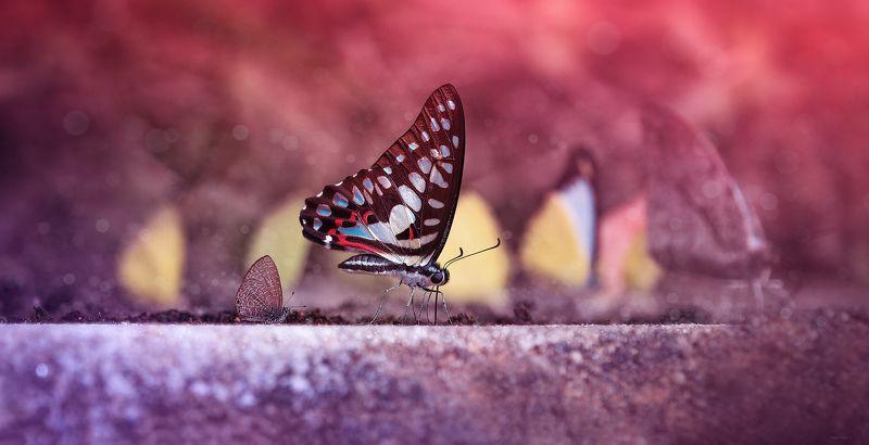 природа, бабочки, макро Буду хорошо кушать, стану таким же большим и красивымphoto preview