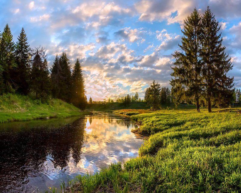 фототур, закат, река, весна, ленинградская область, деревья, лес, сказка, ели, облака, отражение, трава, берег, В тридевятом царстве....photo preview