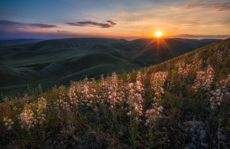 оренбуржье, долгие горы Цветочная серия из Оренбуржья.photo preview
