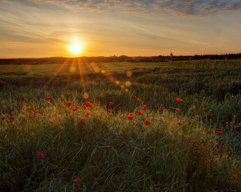 чехия, утро, маки Утренний пейзаж с маками и башней замка на горизонтеphoto preview