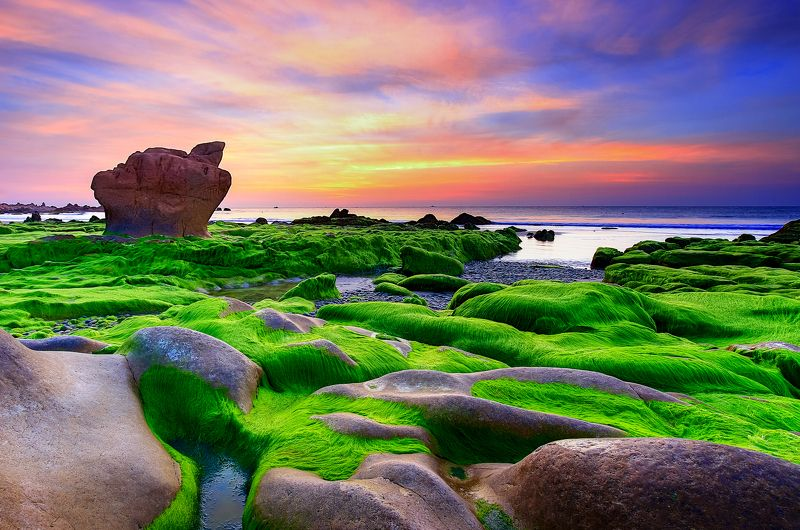 Sunrise Moss on Rockphoto preview