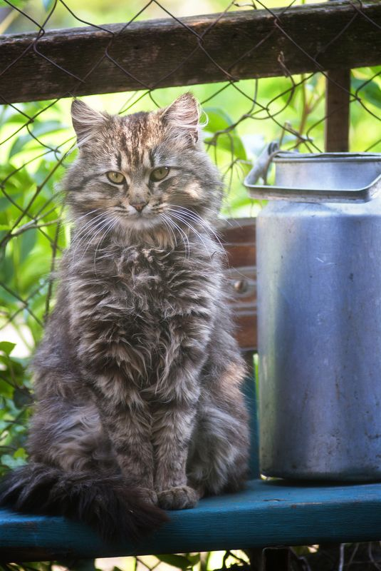 кот, котяра Буду ждать ...photo preview