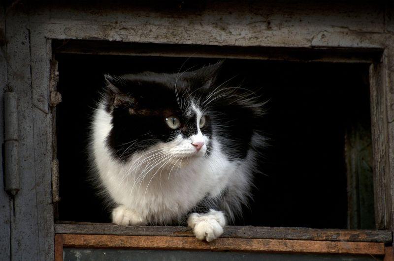 кот, котяра Живу  я тут ...photo preview
