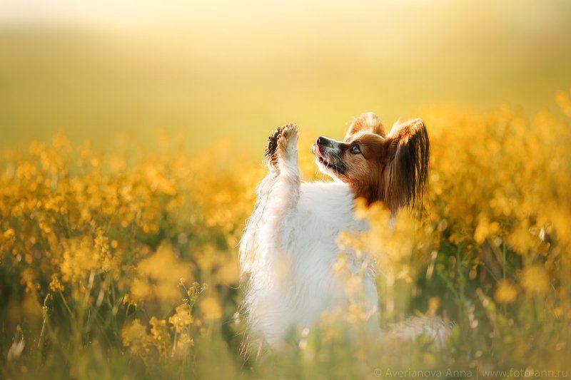собака, природа, рассвет, цветы, рапс Малыши в цветахphoto preview