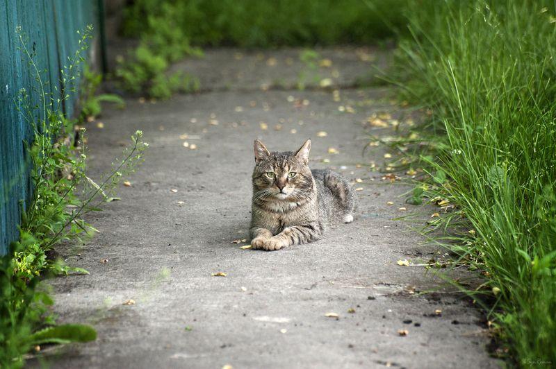 кот, котяра Здравствуй, лето ...photo preview