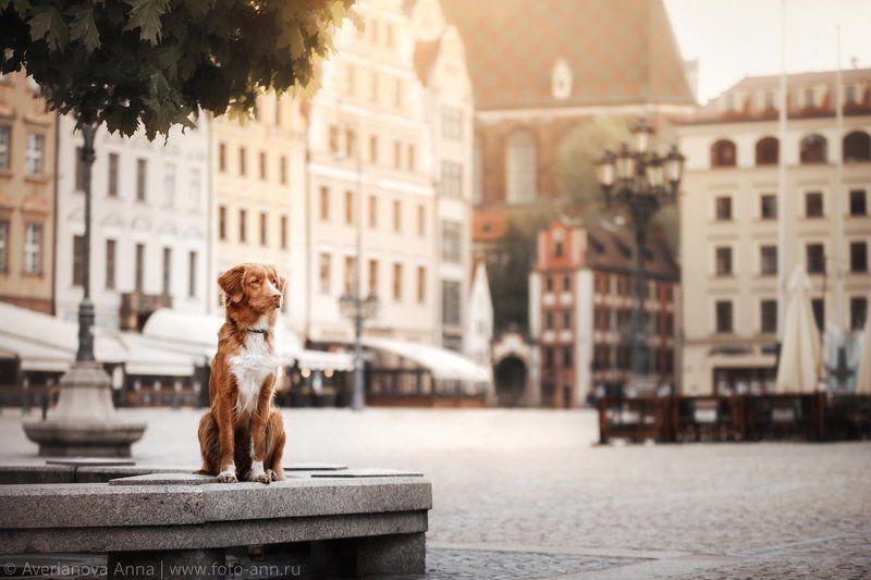 Город, собака, Польша, Вроцлав Рики в прекрасном Польском городе Вроцлав photo preview