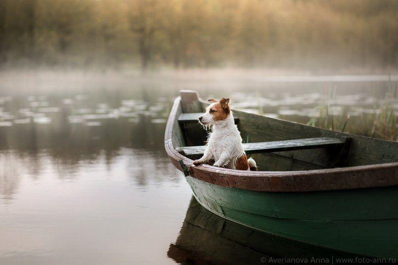 собака, природа, лодка, утро, туман в лодке photo preview