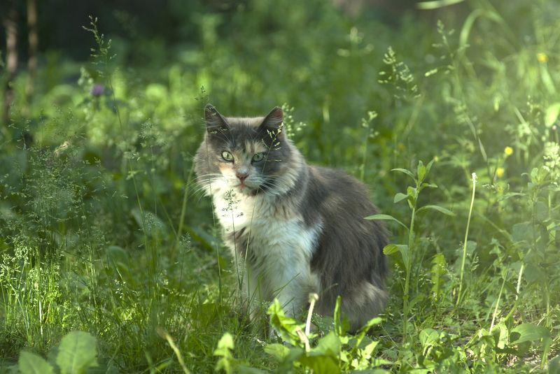 кот, котяра Фрося ...photo preview