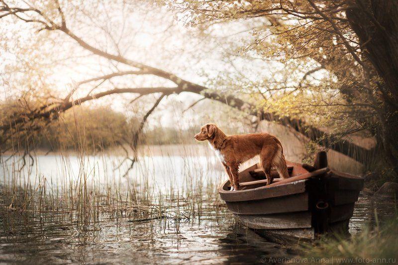 собака, лодка, природа, лето, Польша На озереphoto preview