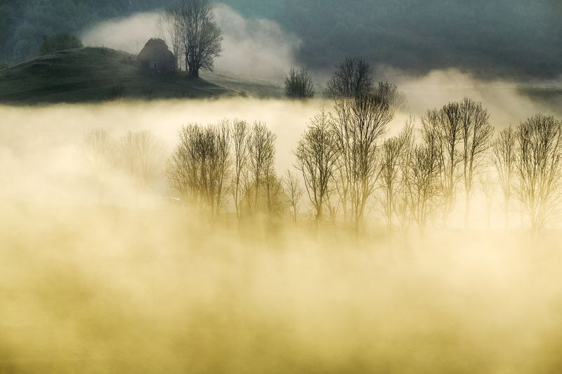mist,fog,morning,nature,apuseni,Romania In that morningphoto preview