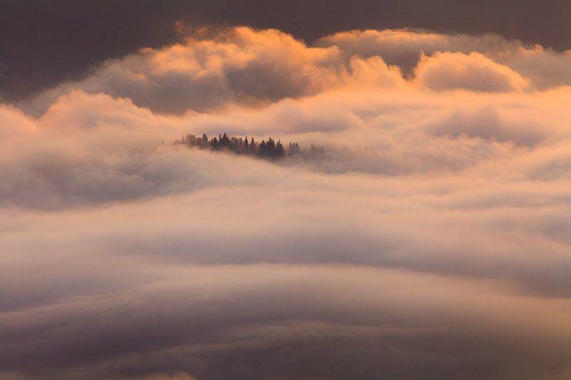 рассвет, туман, карпаты, горы photo preview