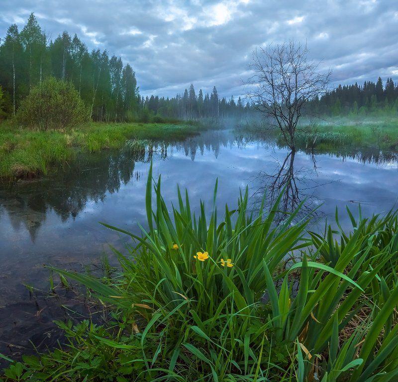 фототур, весна, ленинградская область, деревья, лес, сказка, берёзы, туман, рассвет, озеро, тучи, рогоз, цветы., Магия весны.photo preview