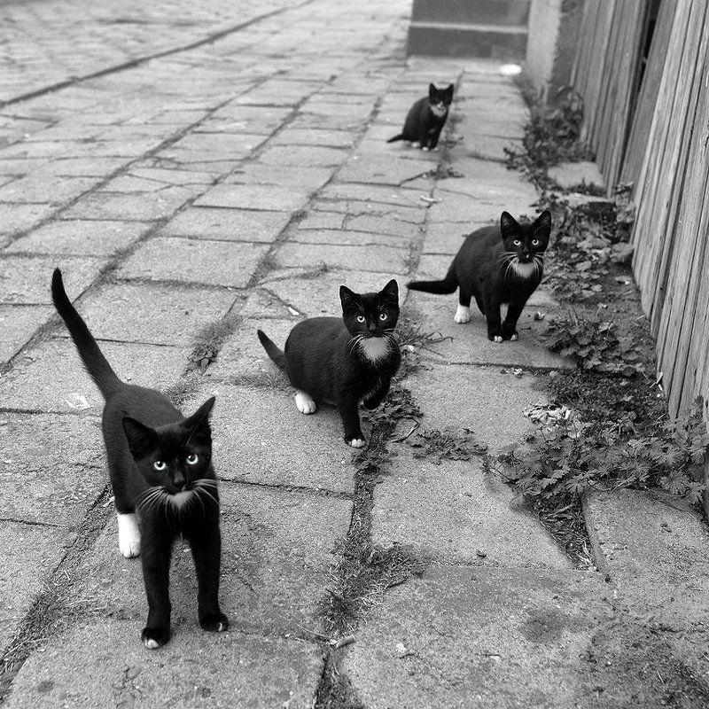 cat cats black protest street homeless white poland dranikowski stange brothers fun Black protest!photo preview