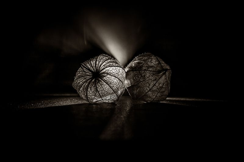 physalis, nature, macro, light´s, shadows, food, still life, bnw, black and white,  Physalisphoto preview