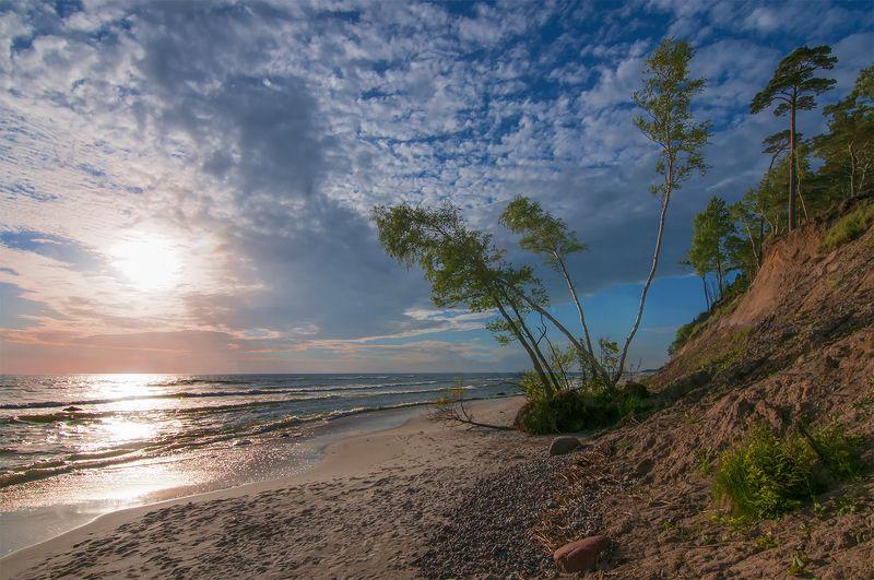 birches,sea,sunset,baltic sea,sand,sky Gone down birchesphoto preview
