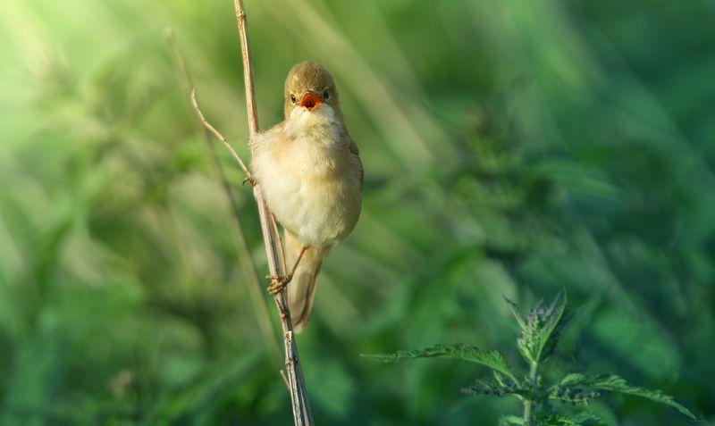 природа, лес, животные, птицы Утреннее солоphoto preview