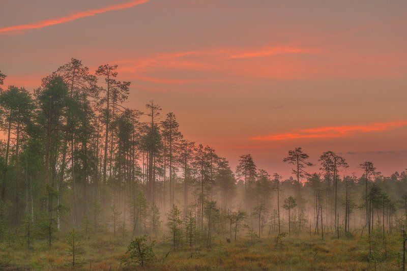 карелия, рассвет, север, туман Рассвет на болоте.photo preview
