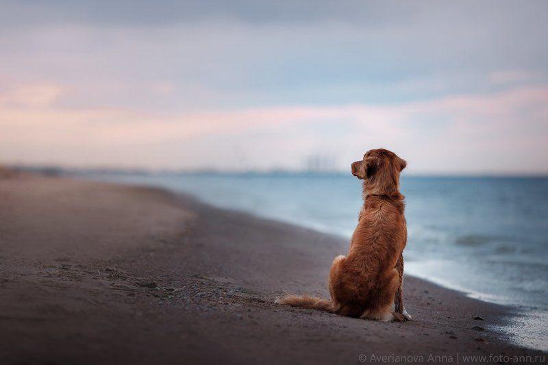собака, море, природа в ожидание закатаphoto preview