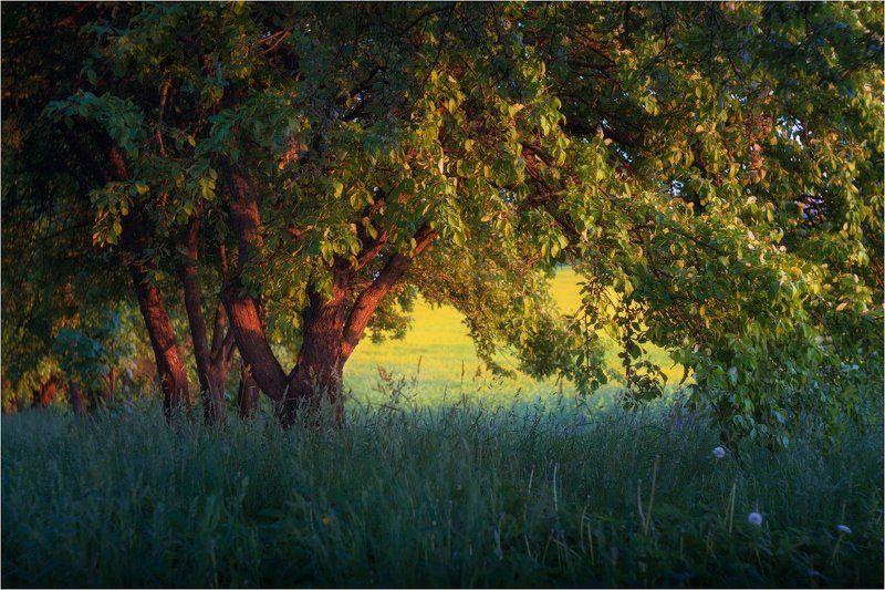 лето, вечер, helios 77m Вечерний пейзажphoto preview