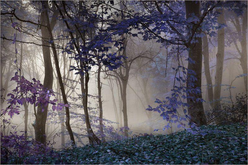 Мистический лес 10photo preview