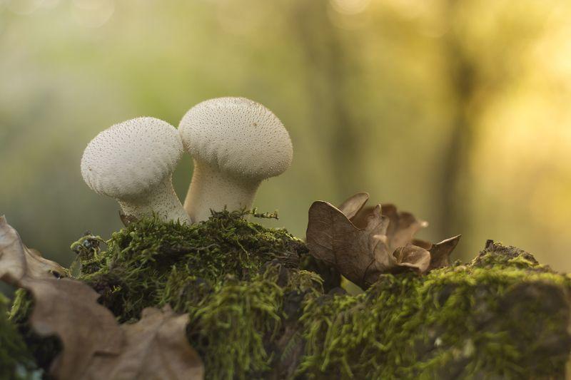 mushroom, nature, color, bokeh, autumn, ground, leaves, macro, close-up, грибы, природа, цвет, боке, осень, земля, листья, макро, крупный план Togetherphoto preview