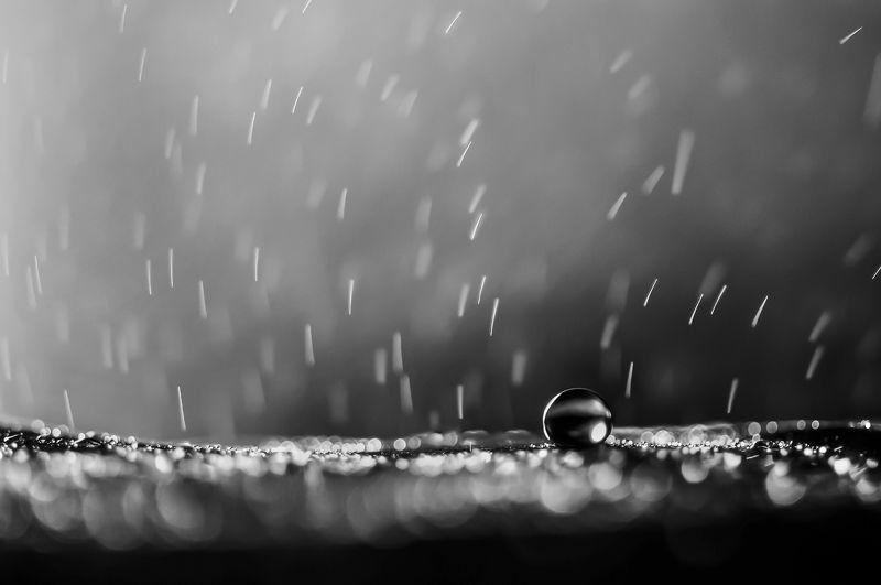 water, macro, light, drops, drop, dandelion, droplet, bokeh,droplets,,reflection, вода, макро_свет, капли \\\\\\.//photo preview