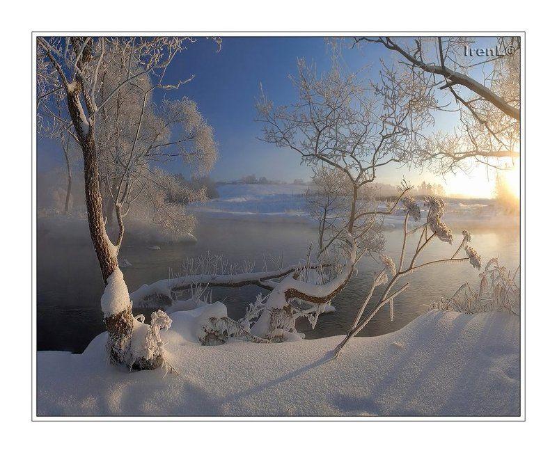 зимние цветыphoto preview