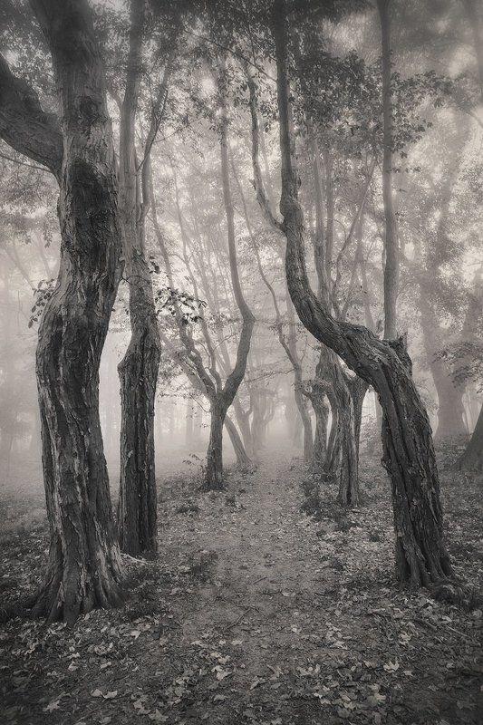 old park tree trees magic mist path alone silence poland dranikowski leaf autumn bw dark Old Park..photo preview