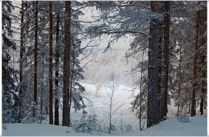 Приглашение в зимуphoto preview