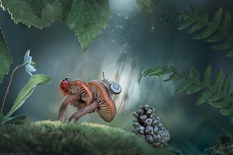 украина, коростышев, весна, лес, красота, макро, макро мир, природа, макро-красота, макро цветы, цветы, макросьемка, грибы, мох, сказка, чорный, ***photo preview