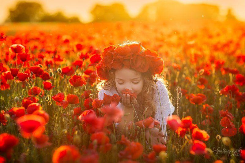 маки, маковое поле, детская фотография, poppies Элли в маковом полеphoto preview