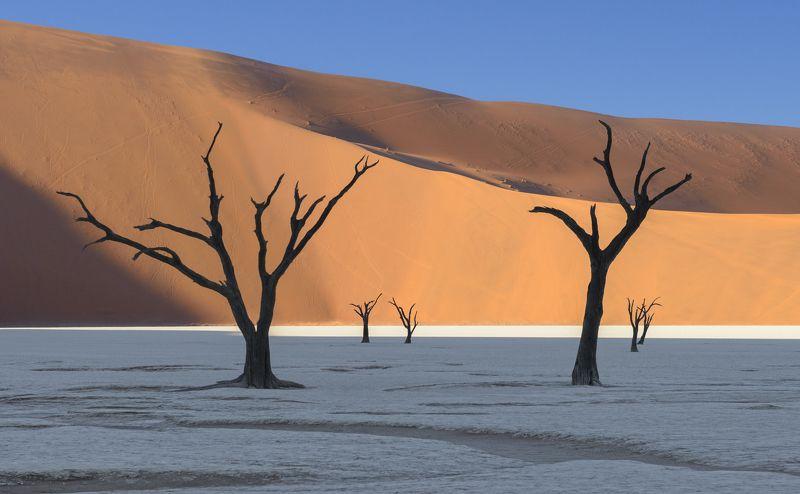 namibia, намибия, дедвлей, deadvlei Deadvlei Forestphoto preview