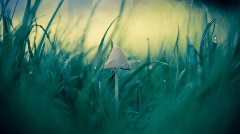 mushroom, macro, green, cinematic, middle, center, close-up, beauty, bokeh In the middle photo preview