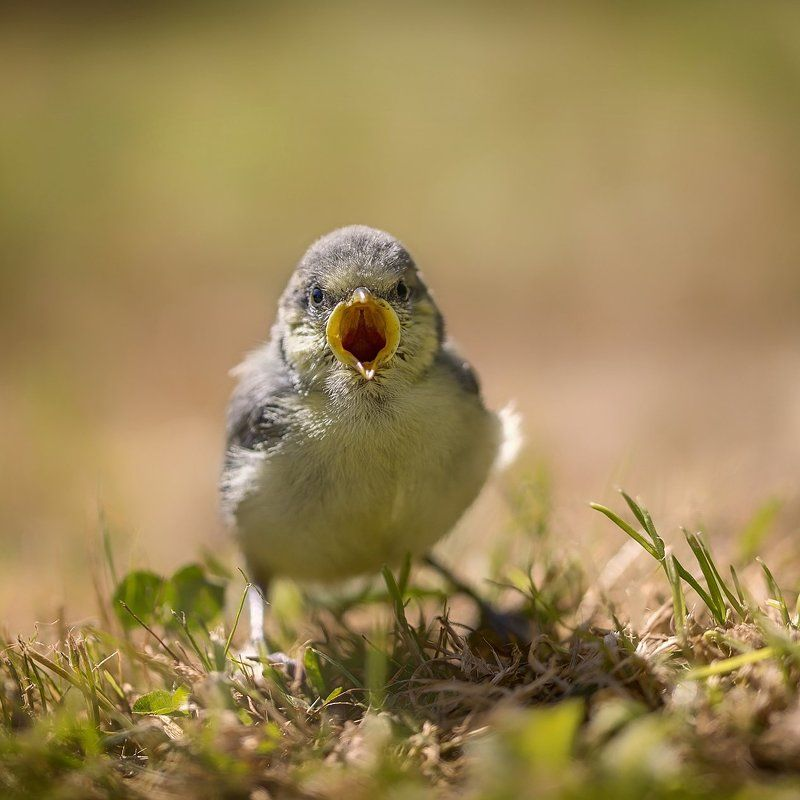 Angry birdphoto preview