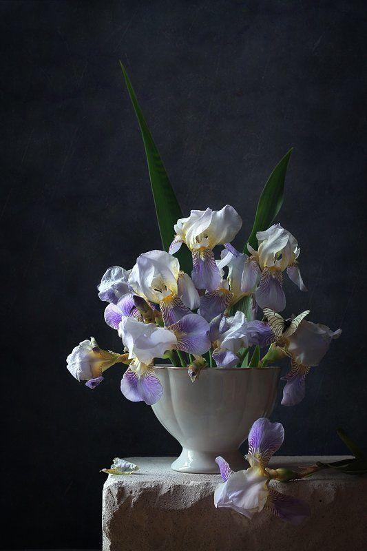 натюрморт, цветы, ирисы, бабочка *photo preview
