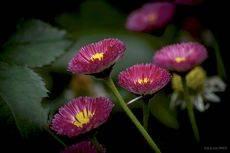 Цветочный фейерверк