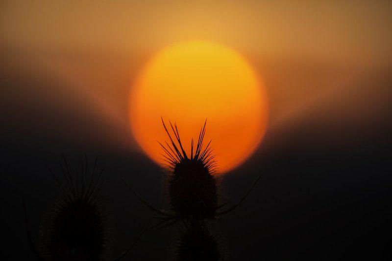 sunset,landscape Sunphoto preview