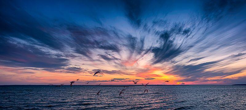 чайки, закат. днестровский лиман, seagulls, sunset, dniester estuary, sky, landscape, sunset, water, cloud, panoramic Чайки на закате...photo preview