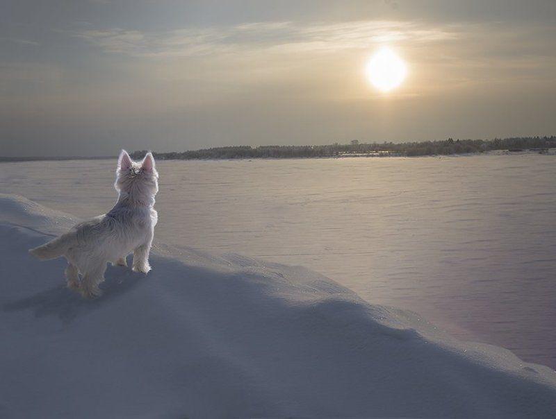 Белое солнце пустыни (северный вариант)photo preview