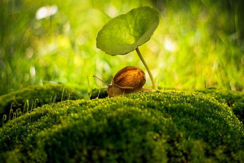snail, moss, macro, green, nature, close-up, ground, morning, center, Улитка, мох, макро, зеленый, природа, крупный план, земля, утро, центр Under my Umbrella... Ellla... Ellaphoto preview